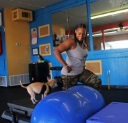 Nutree Fitness provides professional fitness programs for you and your dog