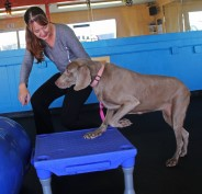 Nutree Fitness provides professional training programs for you and your dog