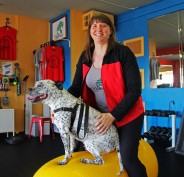 Nutree Fitness provides fitness training programs for you and your dog
